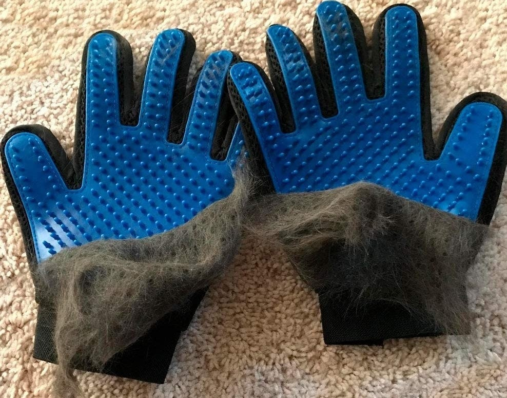 a pair of blue deshedding gloves with a layer of fur being peeled off of it