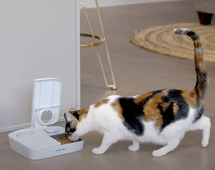 A cat is eating food from an automatic feeder