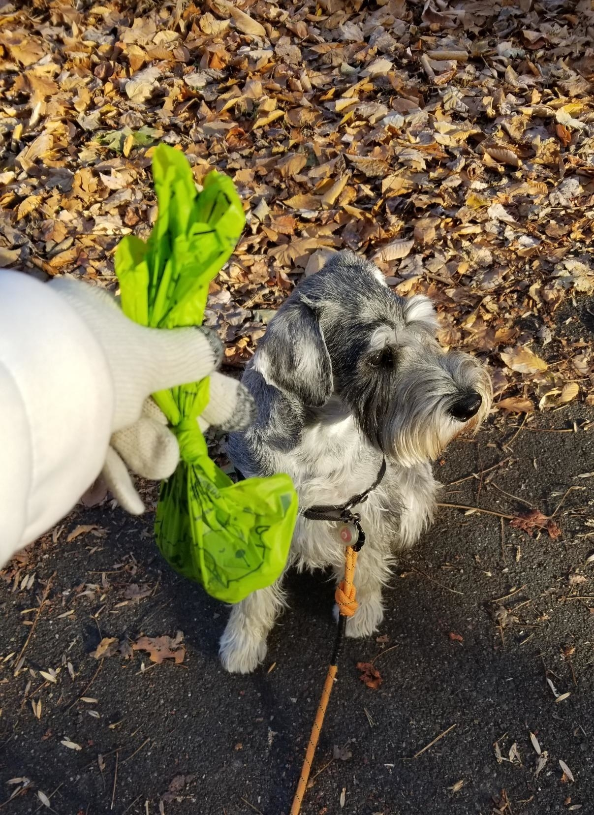 Reviewer's photo of using the green compostable bag after their dog