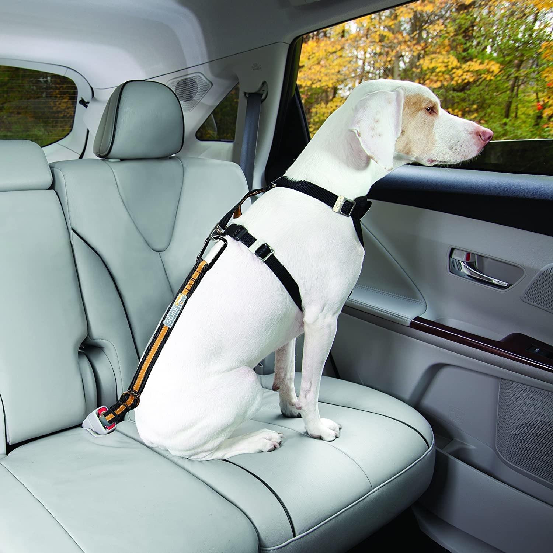 Model dog wearing the black and orange seatbelt tether