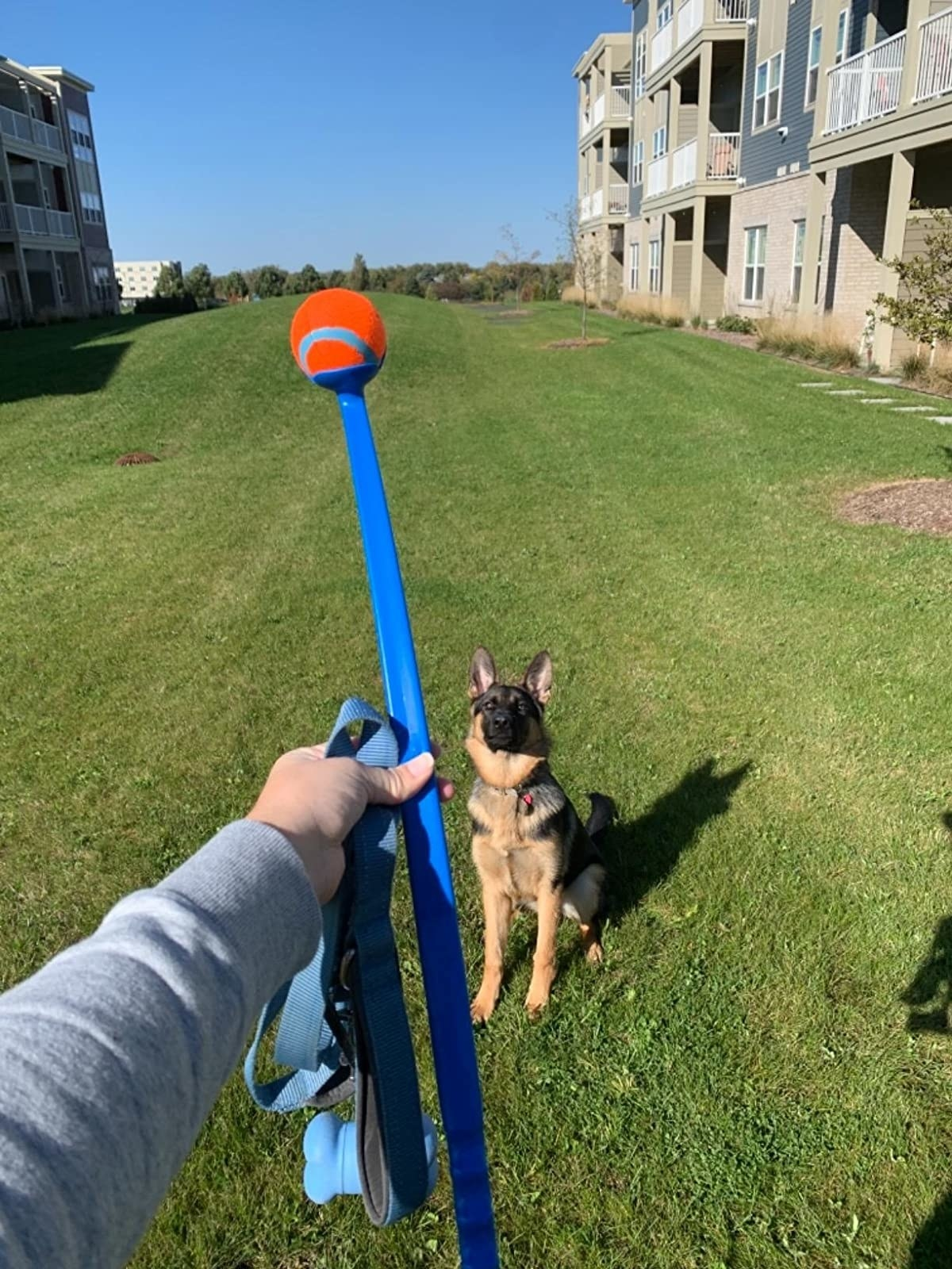 A reviewer using the ball launcher to play fetch with her dog