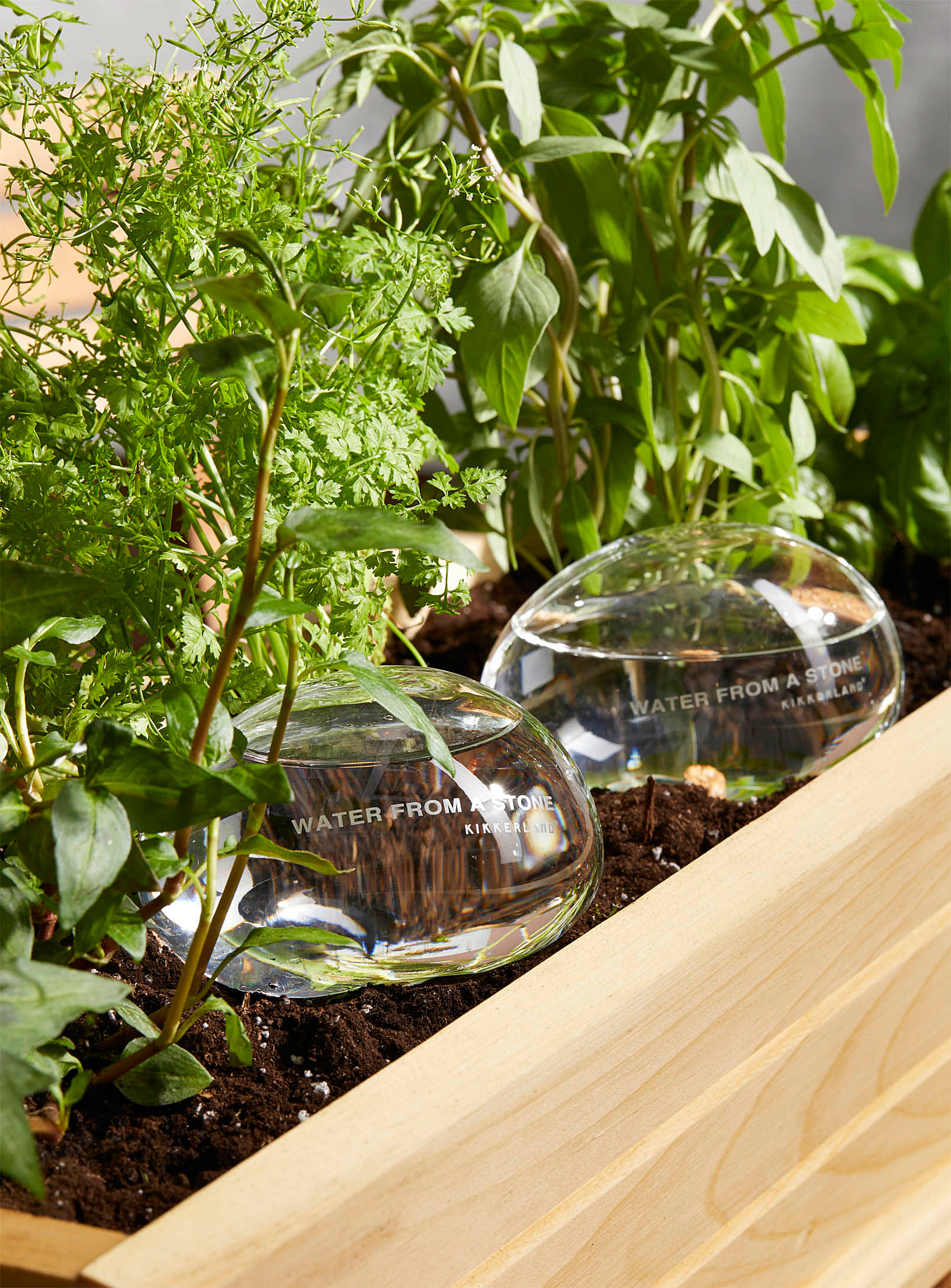 two glass globes filled with water in a plant bed