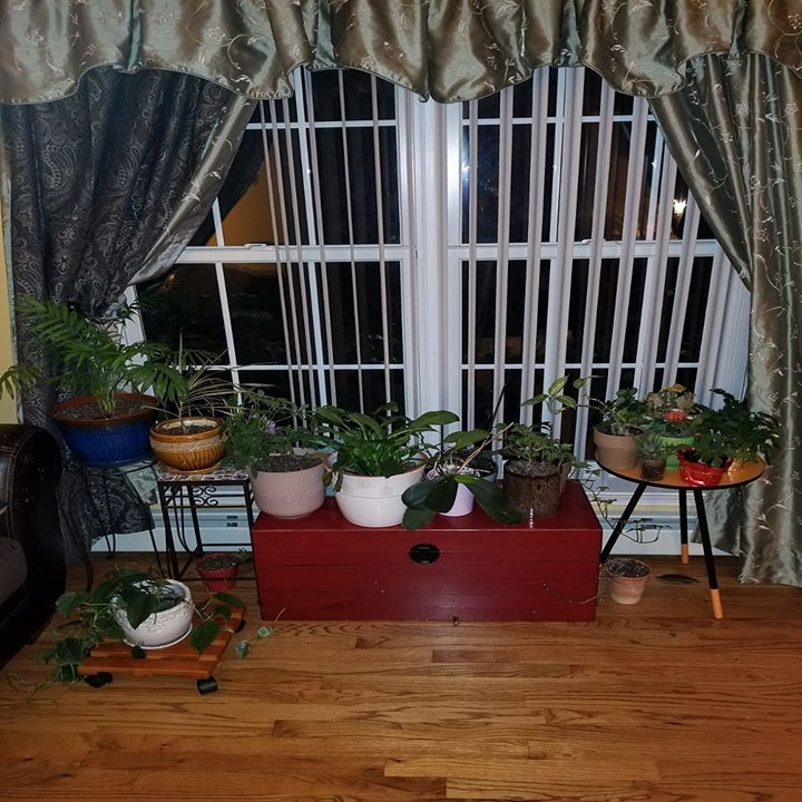 Reviewer showing multiple potted plants on the floor of their home