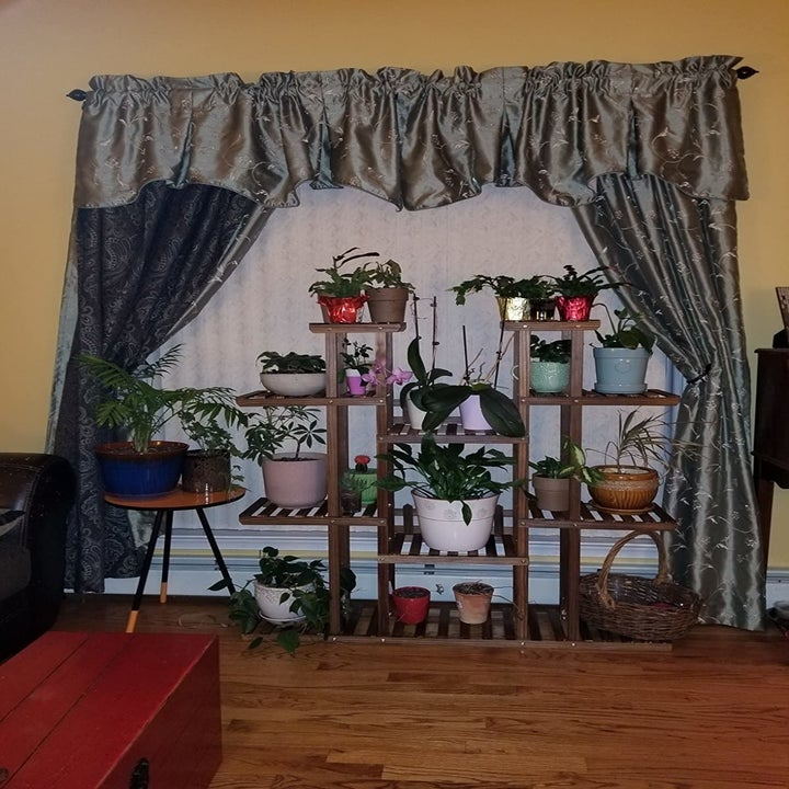 Same reviewer showing the plants sitting on the multiple shelves of the plant stand, no longer all over the floor