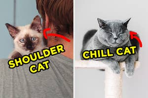 "On the left, a kitten sitting on someone's shoulder with an arrow pointing to it and ""shoulder cat"" typed next to it, and on the right, a cat sleeping on a scratching post with an arrow pointing to it and ""chill cat"" typed next to it"