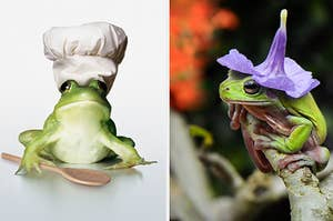 frogs in a chef hat and a flower hat