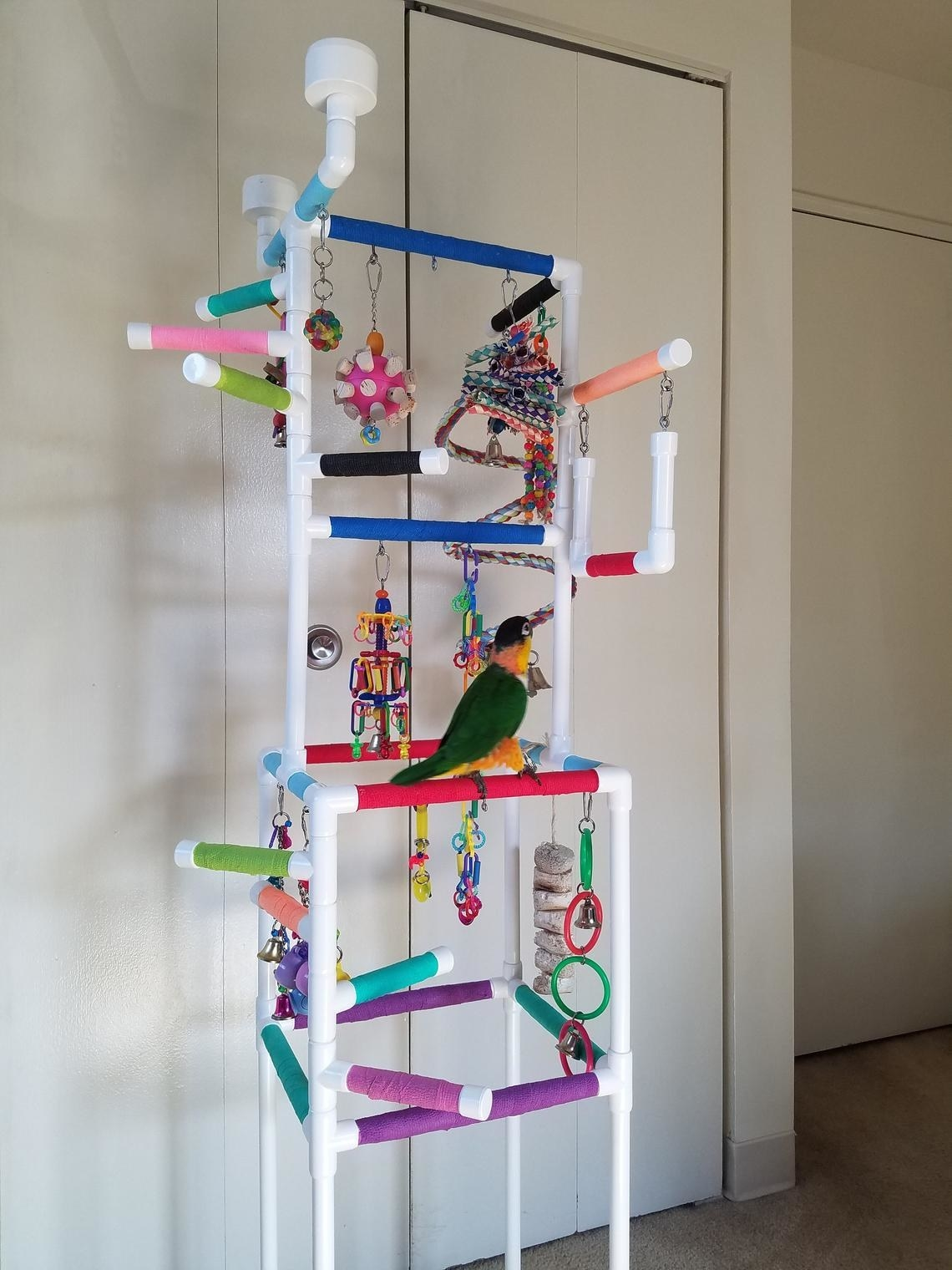 The multi-tiered PVC pipe play gym which has lots of toys attached to it