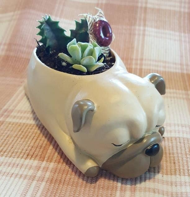Reviewer image of pug planter with potted succulents