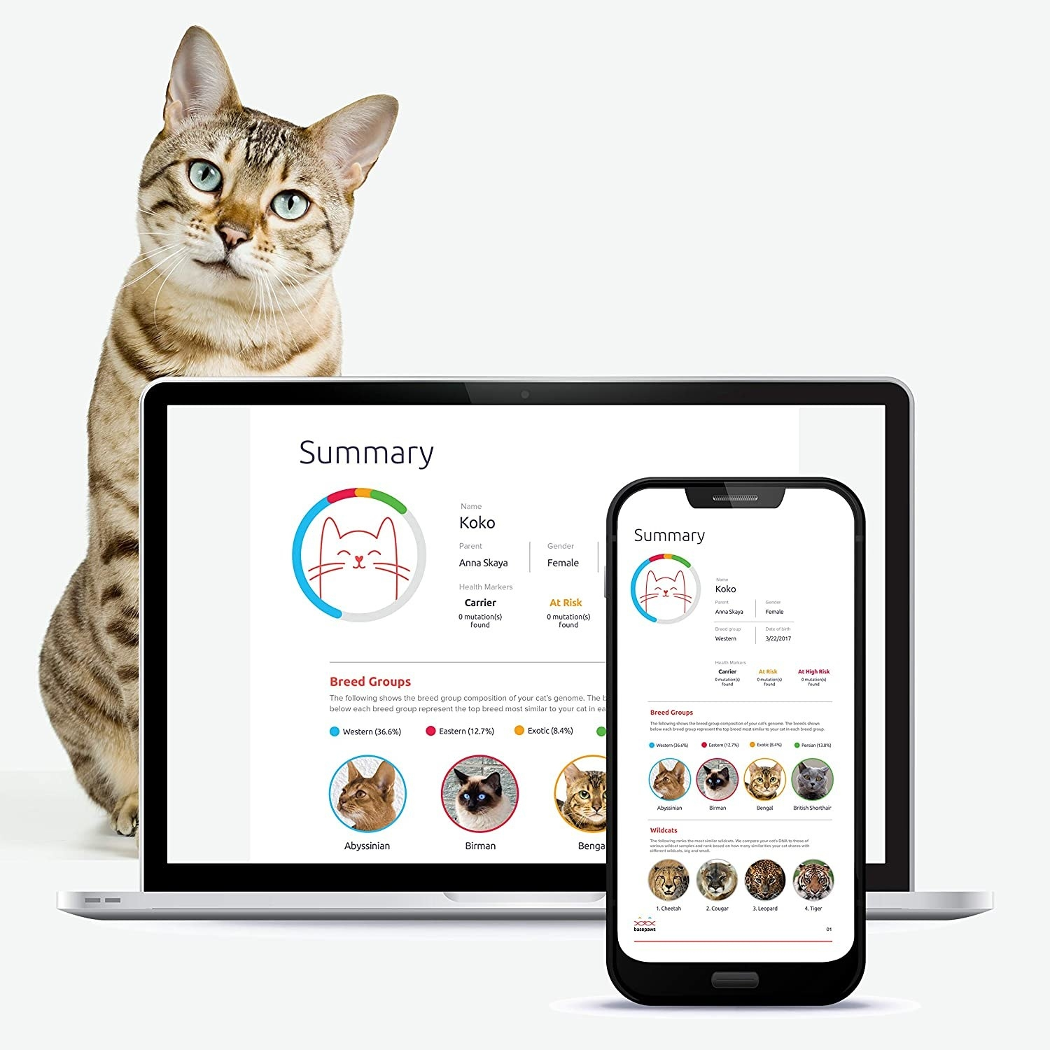 Cat DNA test results