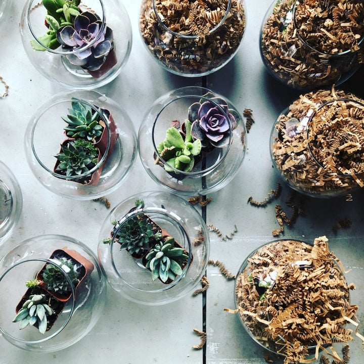 A shot of multiple terrariums with various succulents planted inside