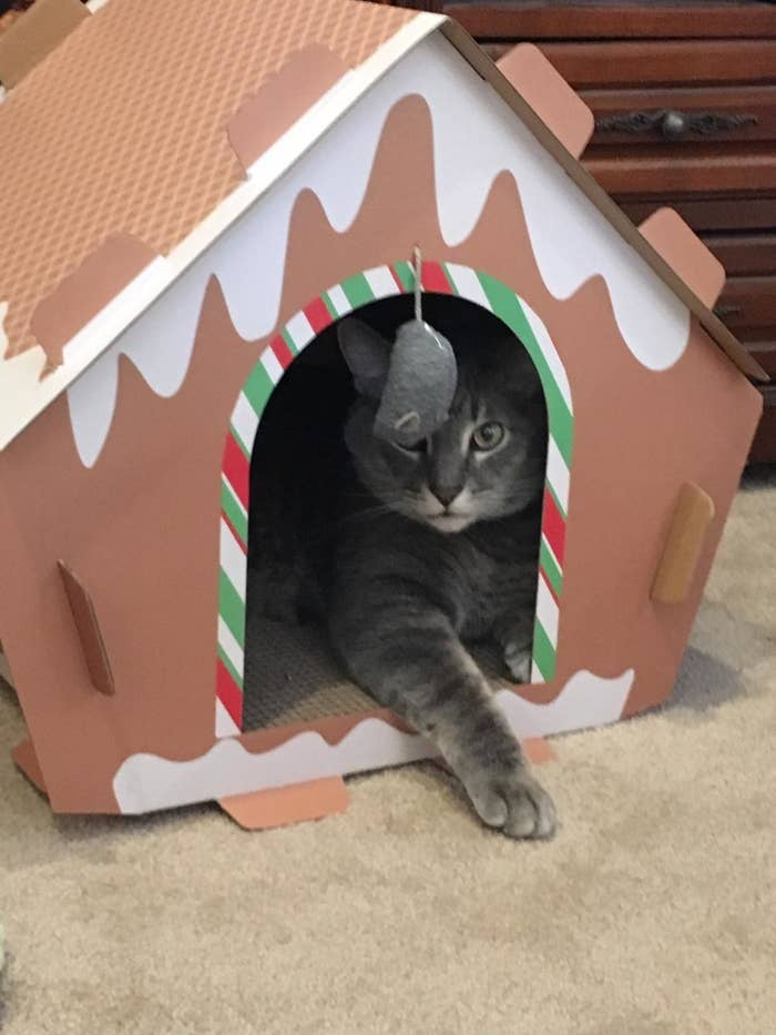 The cat house, which has a rounded doorway opening with a mouse toy dangling from the arch