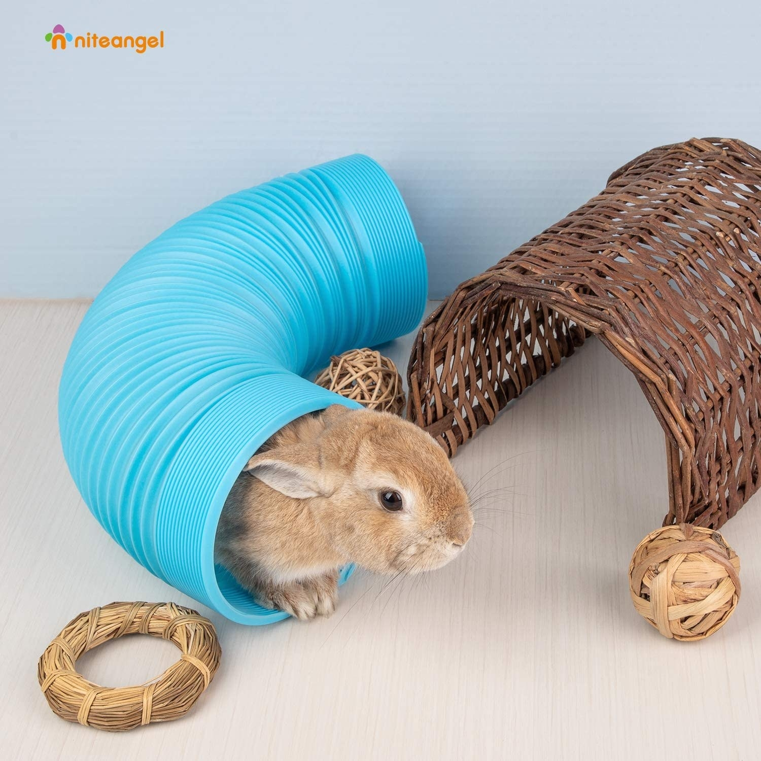 A small rabbit in the blue tube