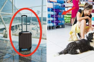 Suitcase by itself and a pet store