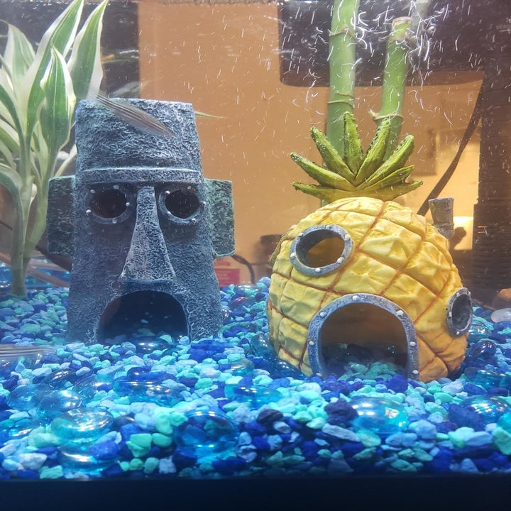 Mini replicas of SpongeBob's and Squidward's houses in a fish tank