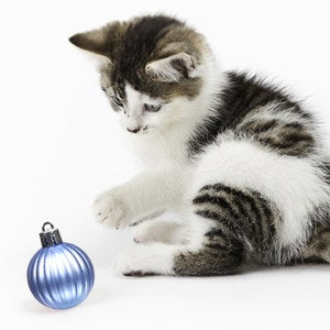 A cat explores one of the ornaments, which is all one piece