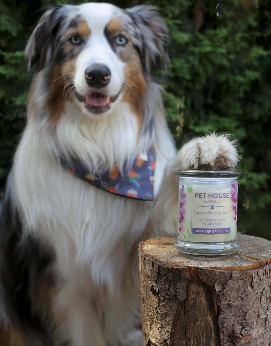 a dog poses with the one fur all lavender green tea candle