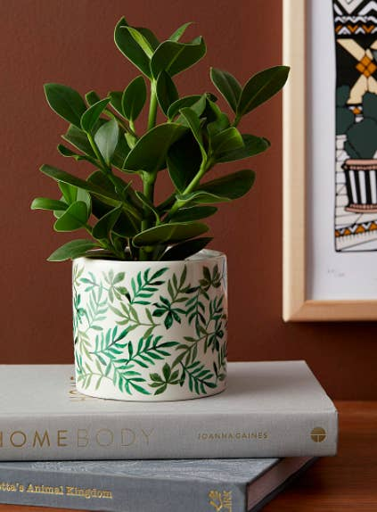 A leaf-print planter on a stack of coffee table books