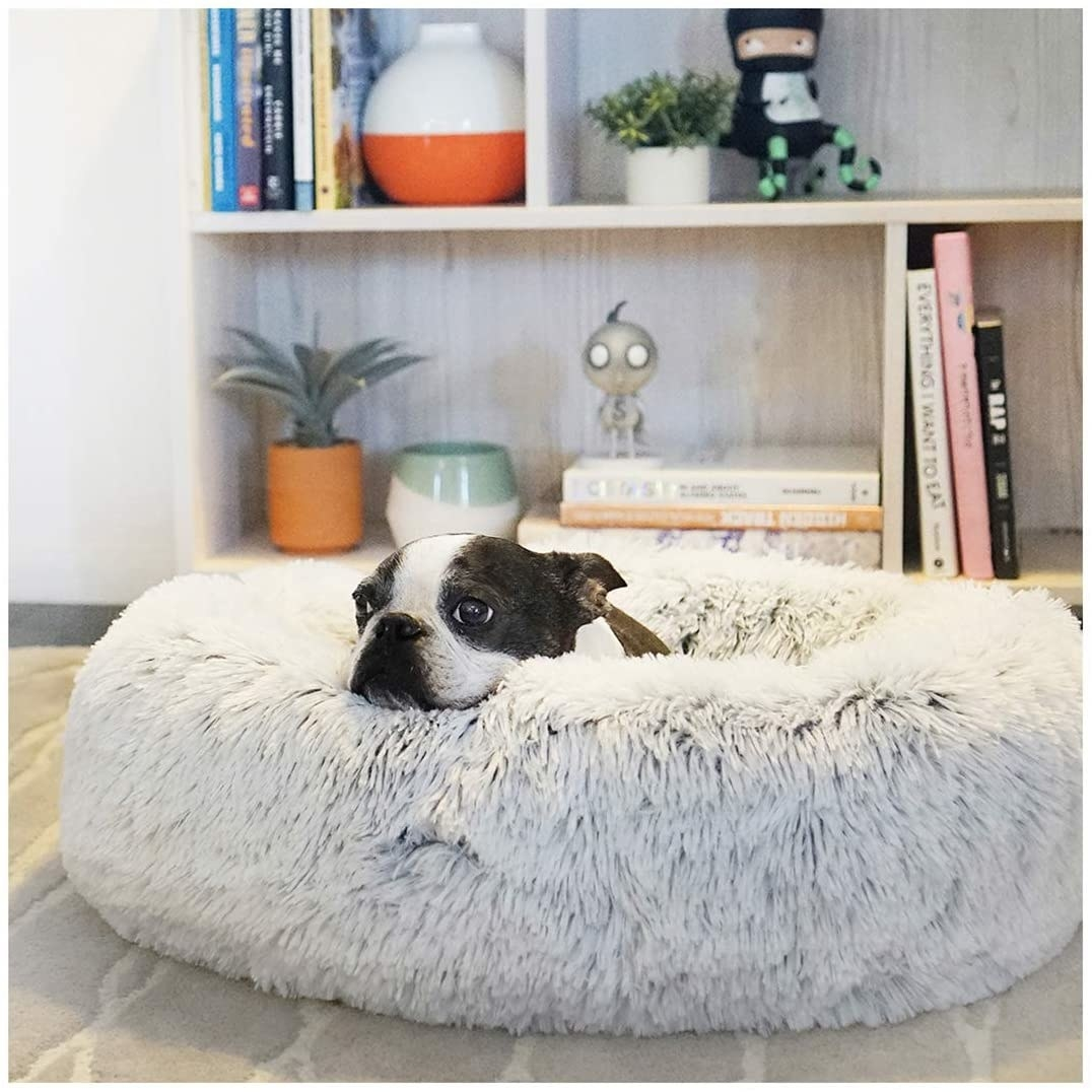 A tiny boxer puppy curled up in the donut shaped bed