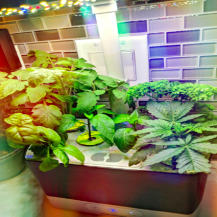 reviewer pic of the AeroGarden Harvest