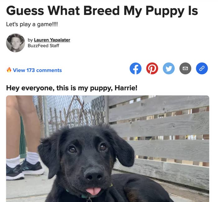 Screenshot of previous post asking what breed the dog is along with a photo of a black puppy with its tongue out.