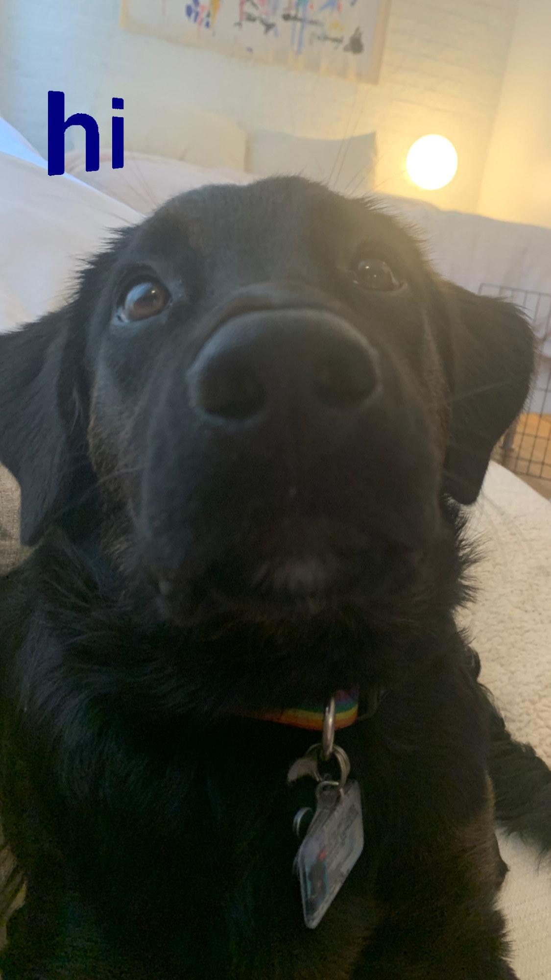 Close up of the pup saying hi