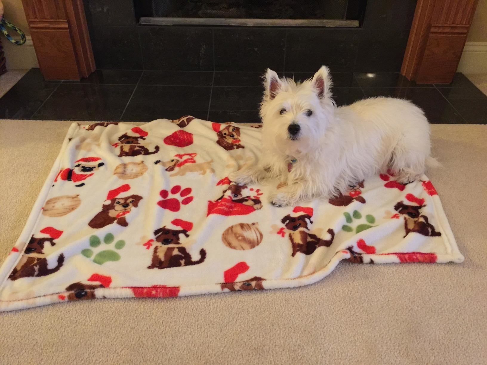 The blanket, which is white with a pattern of puppies in Santa hats