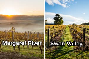 "Side by side image showing two different wine vineyards, one labelled ""Margaret River"", the other ""Swan Valley"""