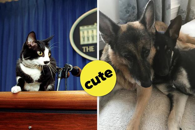 Alle reden über Bidens Hund aus dem Tierheim, aber wusstest du von diesen süßen Haustieren vergangener Präsidenten?