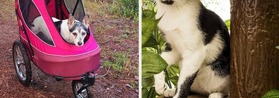 L: Dog in a red stroller R: Cat sitting on a tree-shaped cat tower