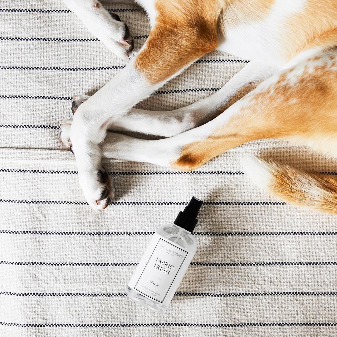 The spray on a floor rug next to a sleeping golden dog