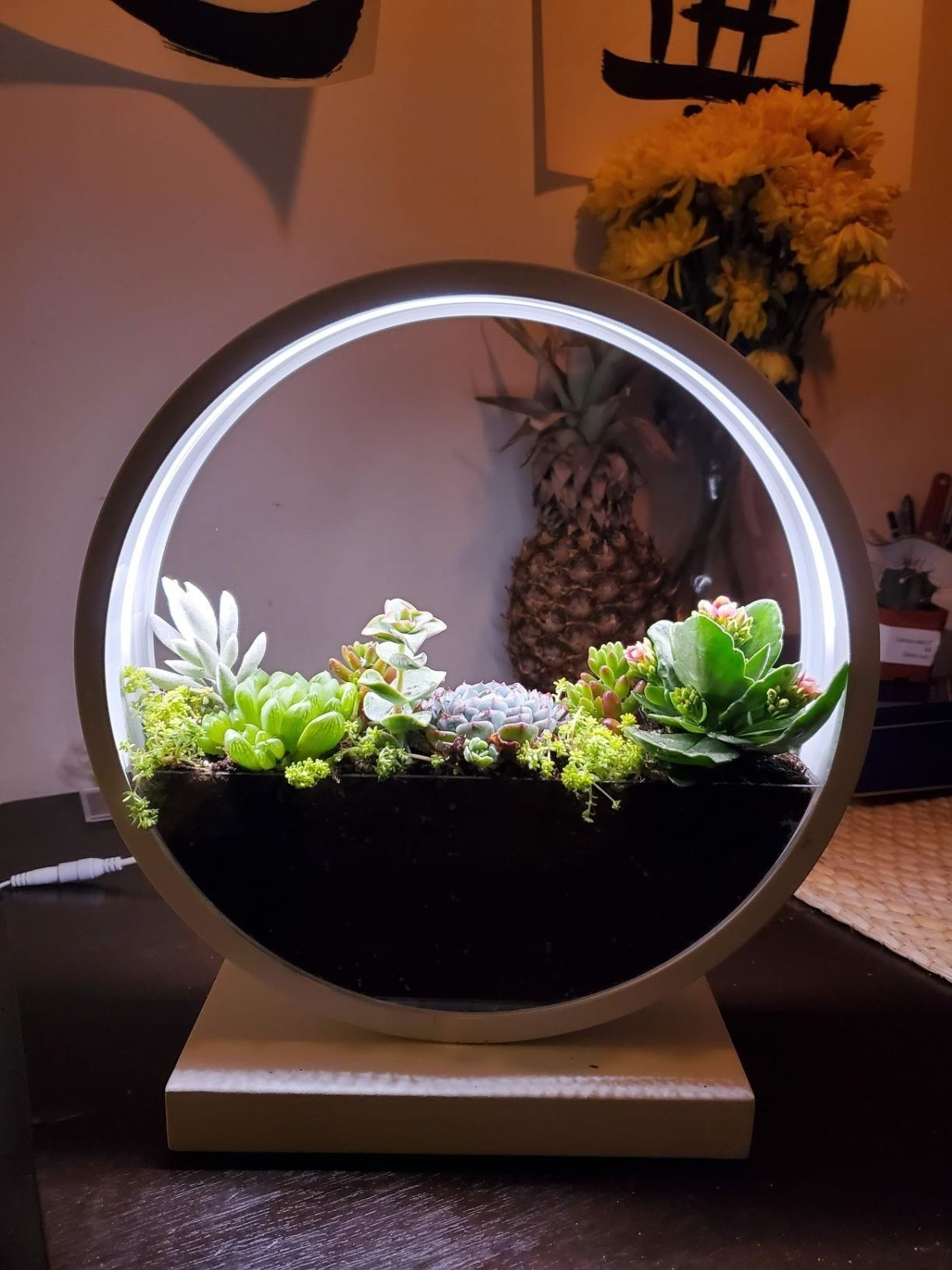 reviewer image of the make lemonade led planter growing succulents