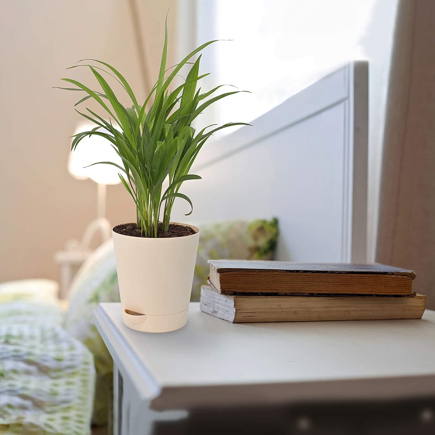The plant kept on a bedside table with 2 books