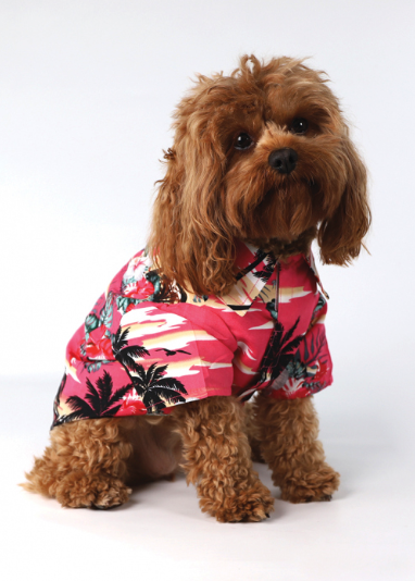 Cute little dog wearing a collared Lowes' shirt