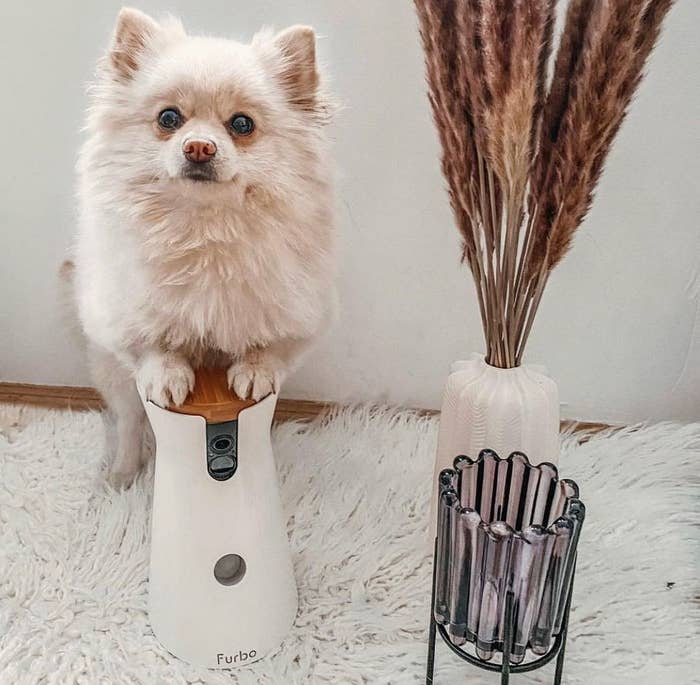 A pomeranian with its paws on top of the dog camera
