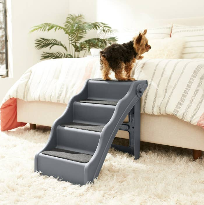 A dog is standing on the top step of a pet step near a bed