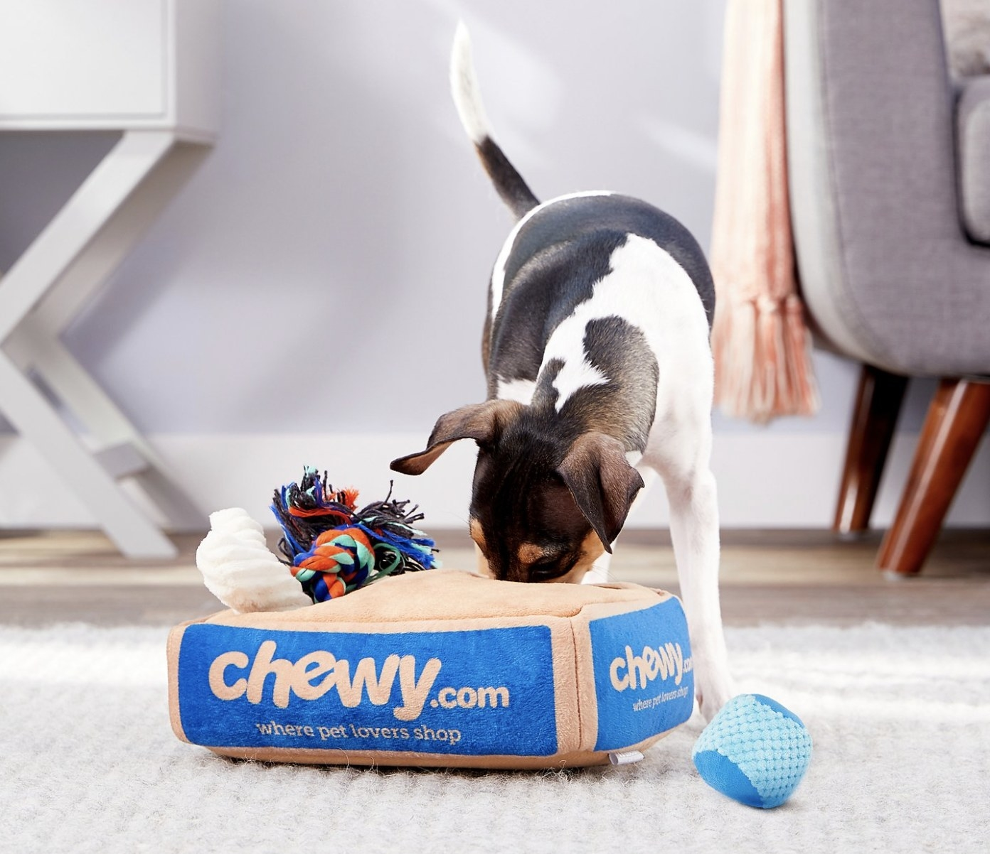 Dog is playing with the Chewy hide in seek toy