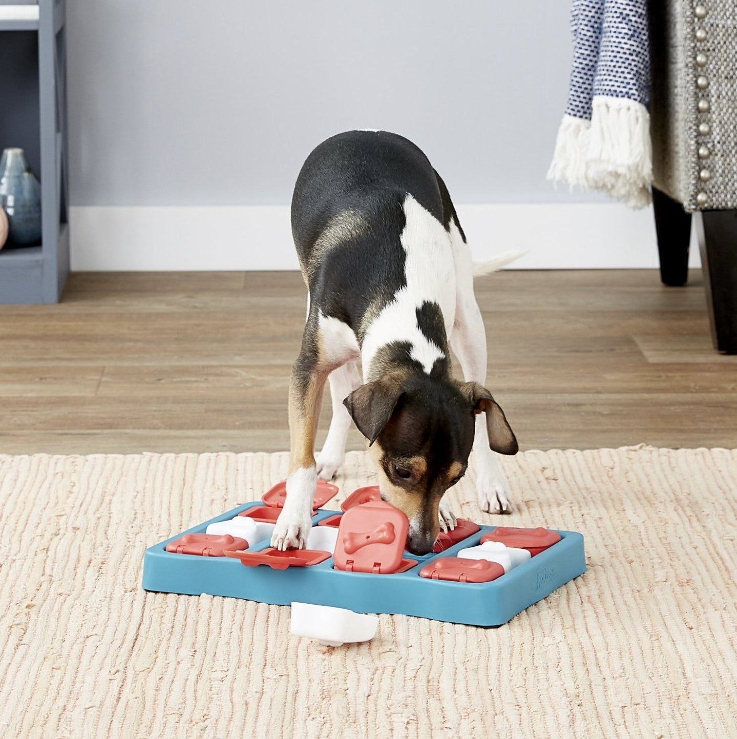 A dog is sniffing for treats in a puzzle game toy