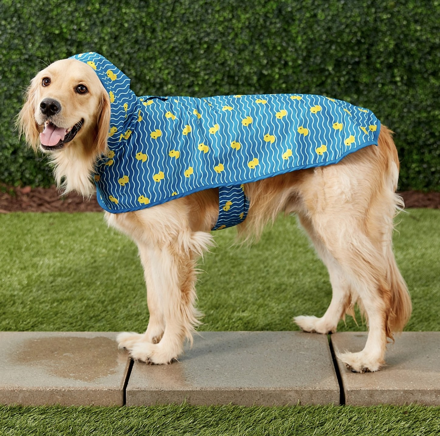 A dog wearing a blue rubber ducky raincoat