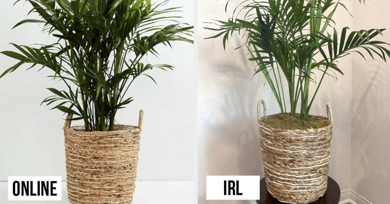 If You're Thinking About Buying A Live Plant Online, Here's What It's Like In Real Life