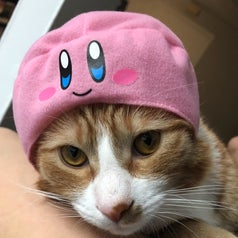 Cat wearing a pink Kirby hat