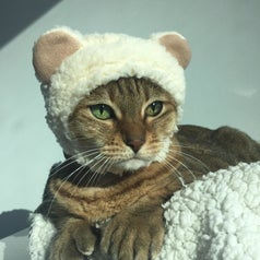Cat wearing a white fuzzy hat with bear ears