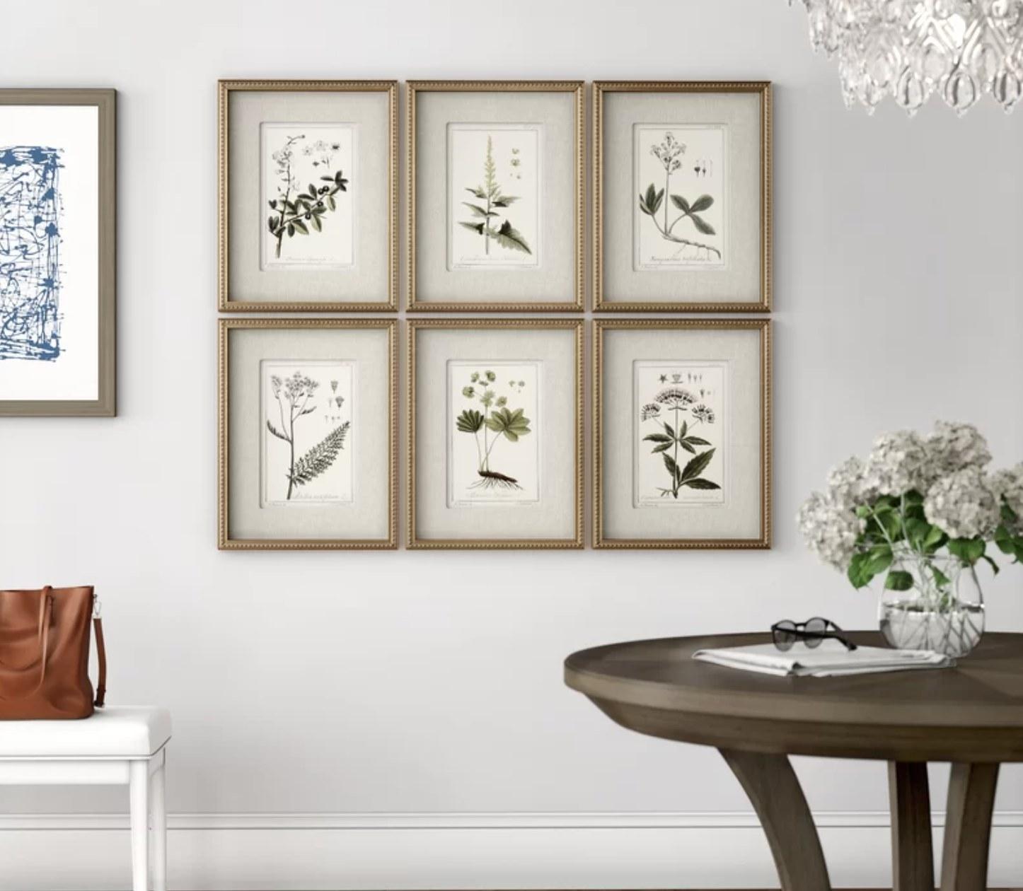 The six botanical prints