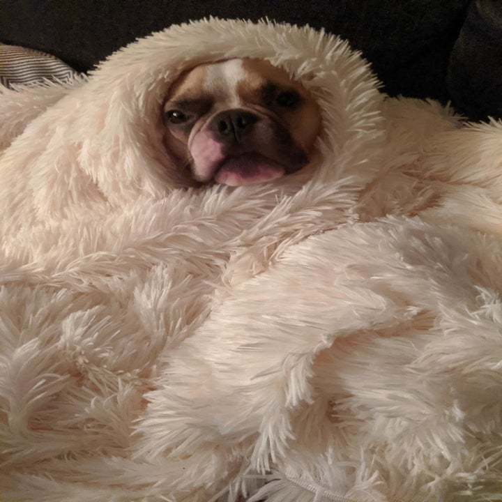 a dog wrapped up in the blanket