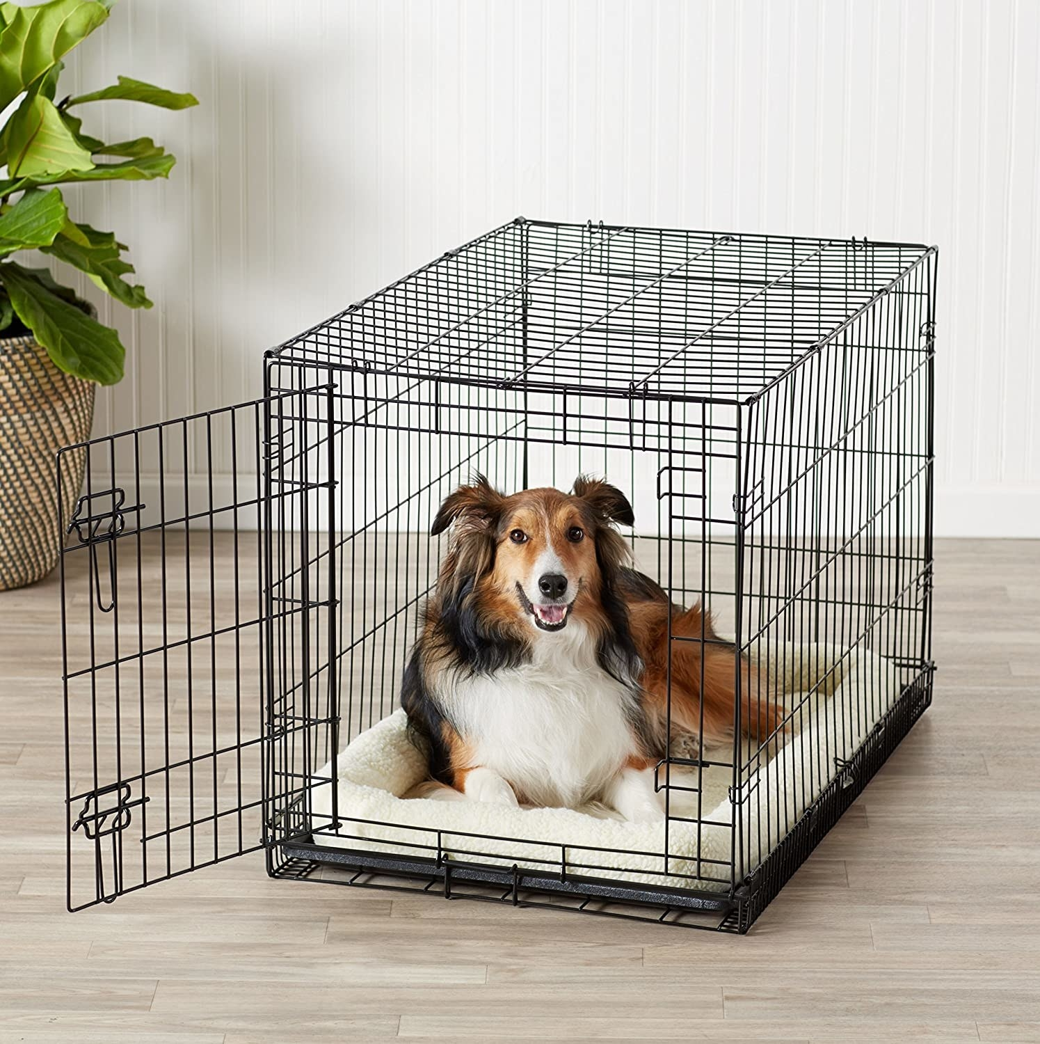 A collie in the crate
