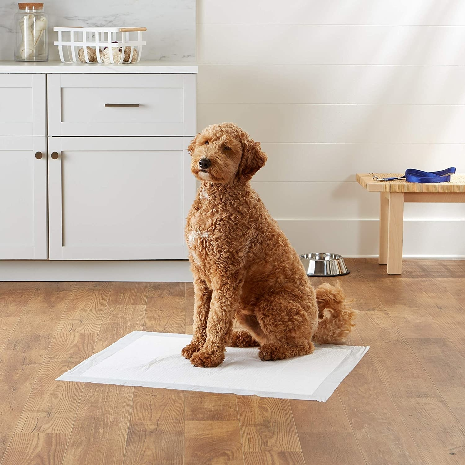 A poodle mix on a puppy pad