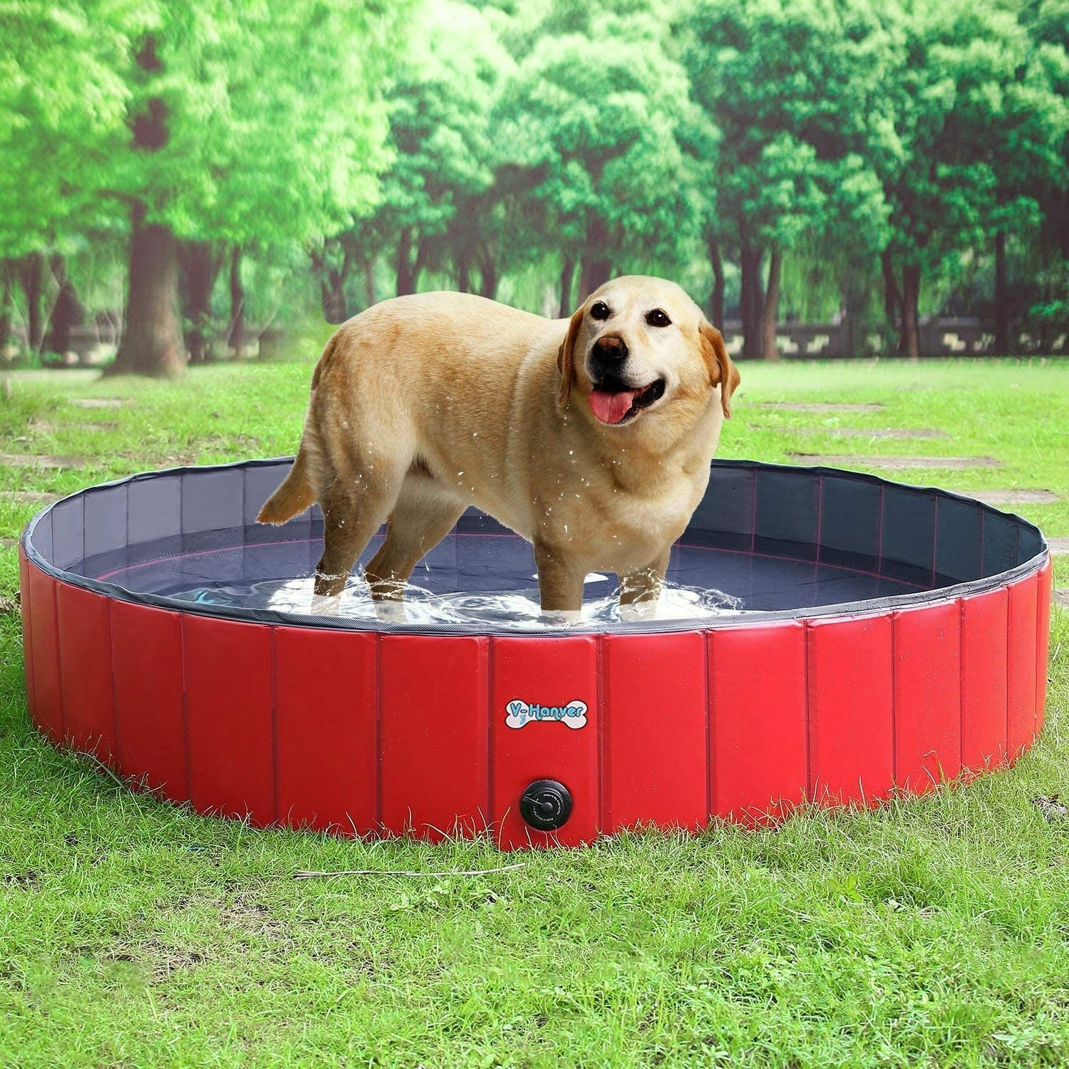 A photoshopped image of a dog in the pool