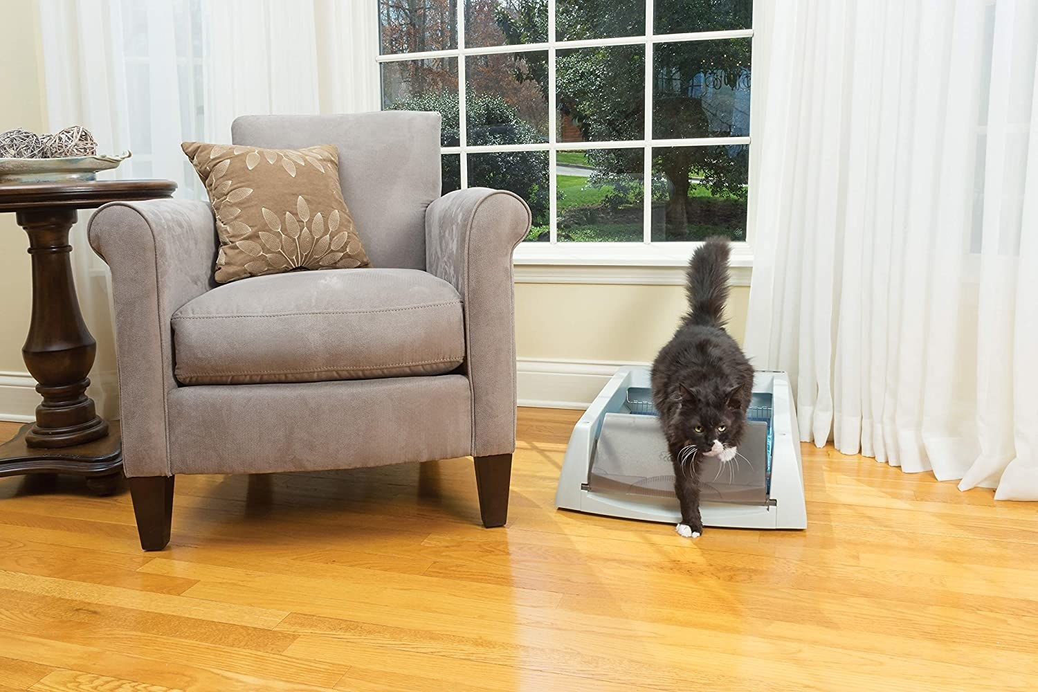 A cat stepping out of the litter box beside a chair