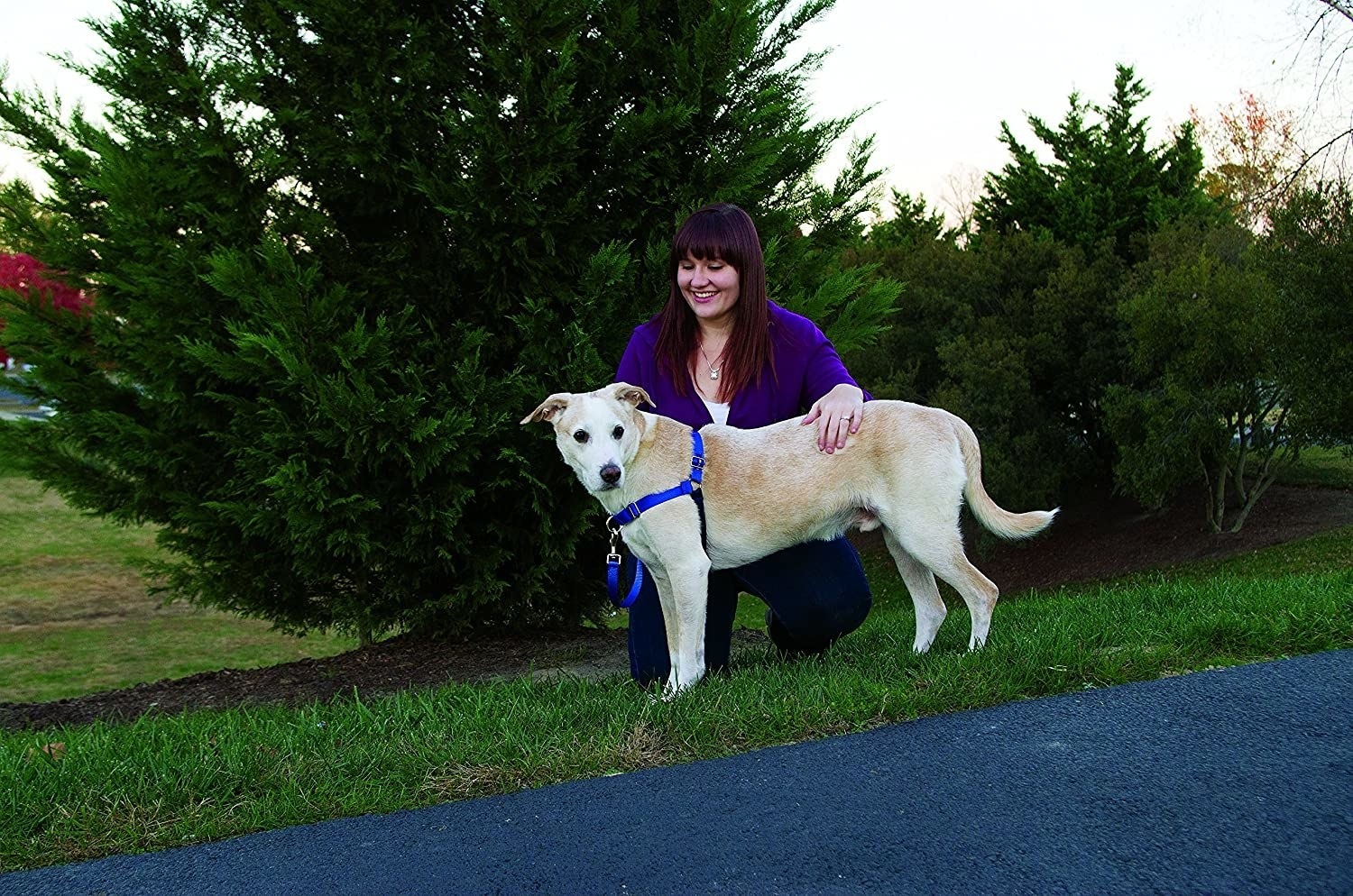 A person holding their dog, it is wearing the harness