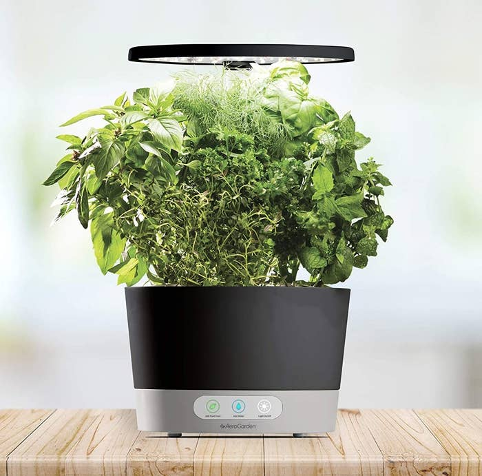 An Aerogarden with herbs in it on a wooden table