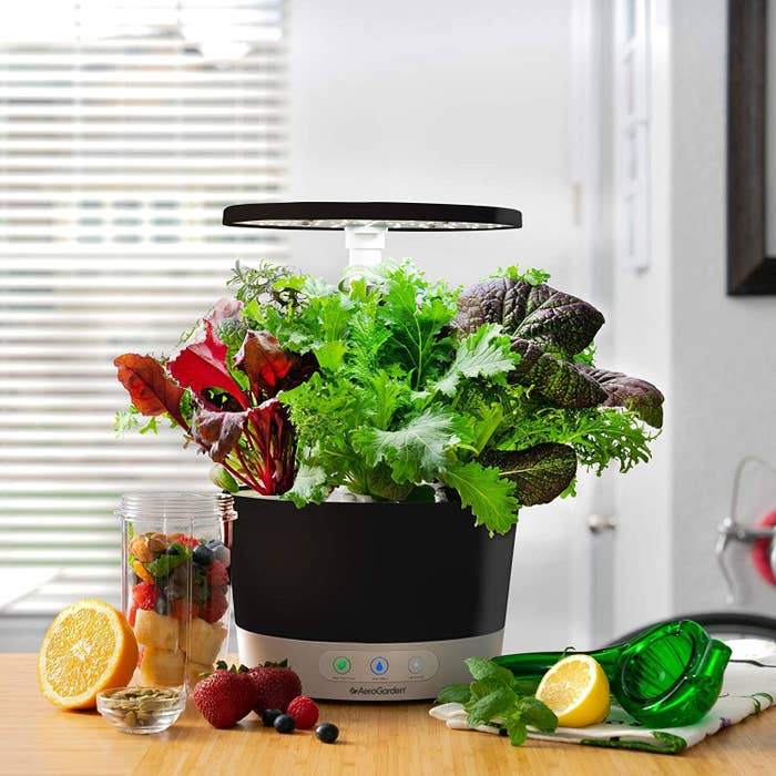 The AeroGarden 360 in black with a bunch of germinated plants